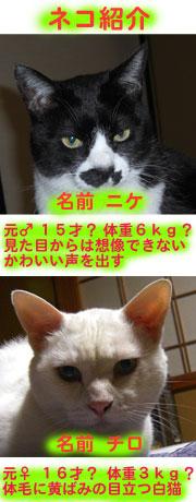 syoukai12.jpg